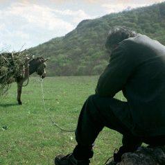 Donkey with Khudo